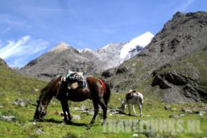 Paardrijden bij Gletsjer