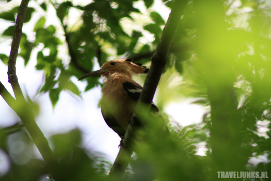 Vogel Anja Reserve