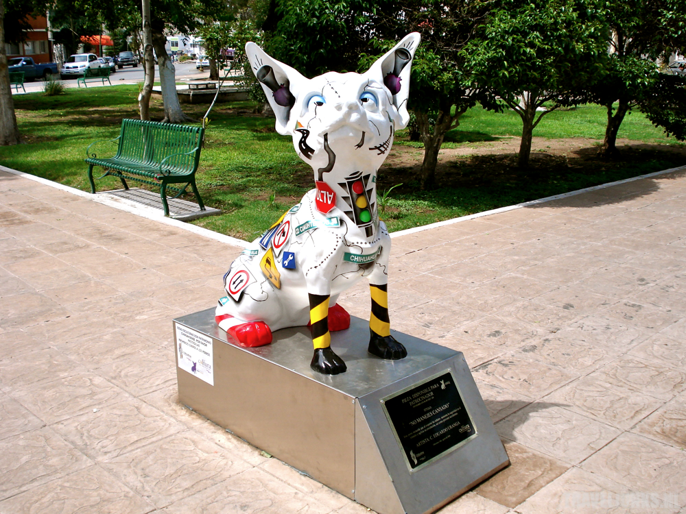 Chihuahua01
