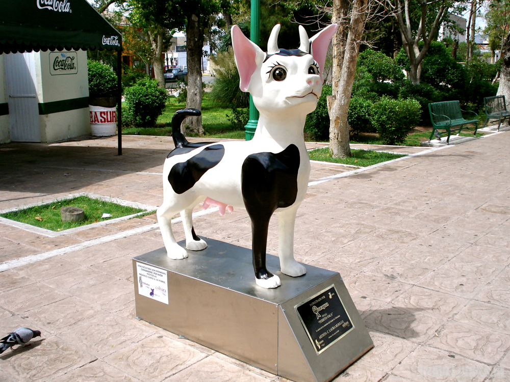 Chihuahua02