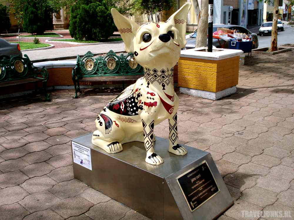Chihuahua03