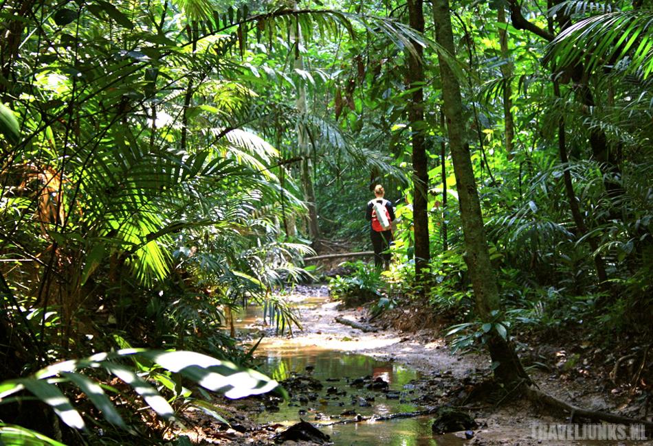 Mariska Thailand Jungle
