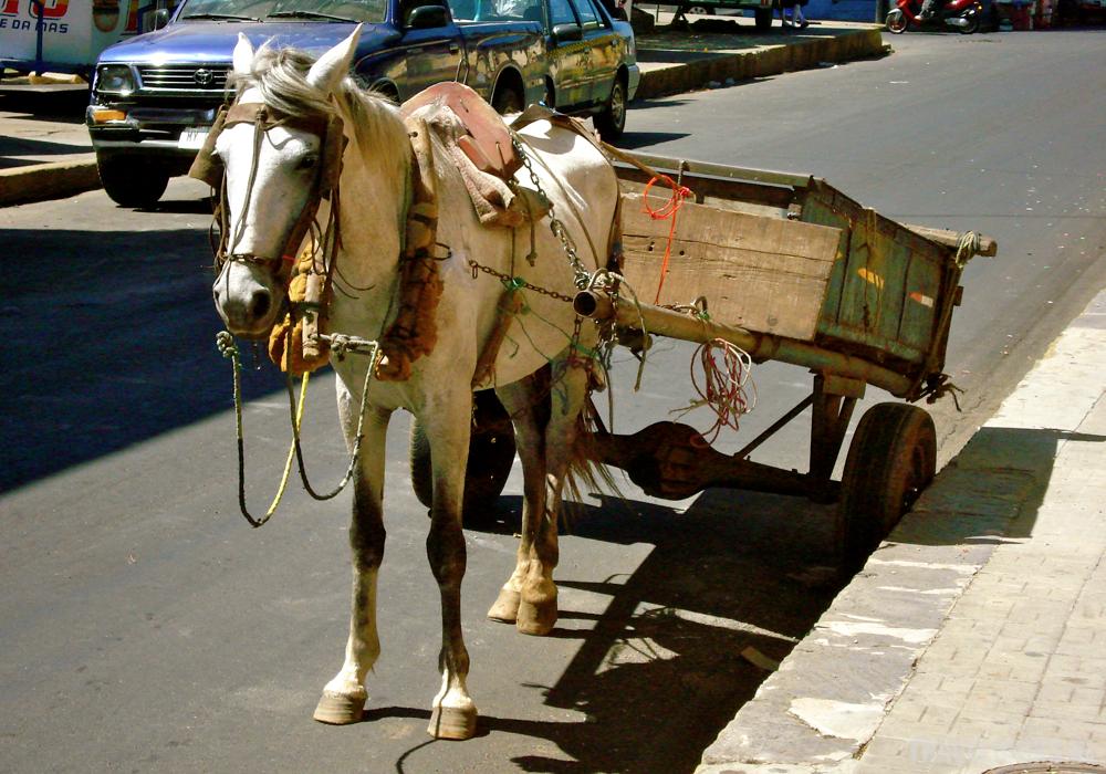 Leon Werkpaard