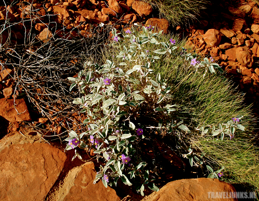 Kings Canyon 05