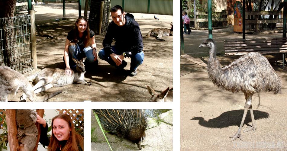 featherdale wildlife park postkaart