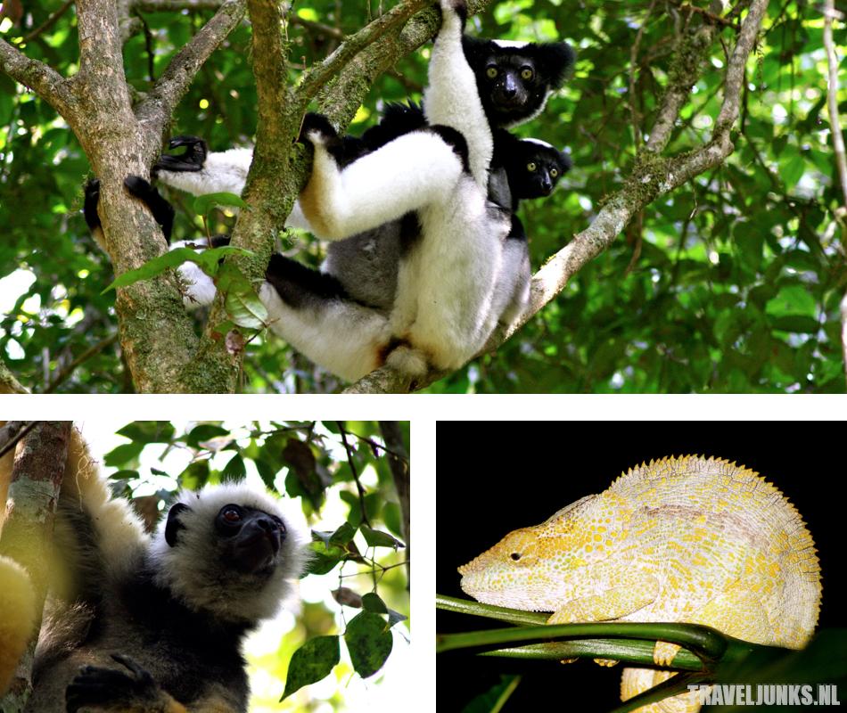Madagaskar Andasibe