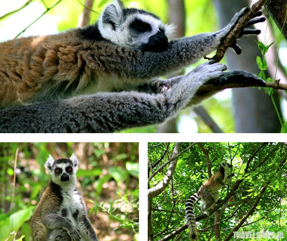 Madagaskar Anja Reserve