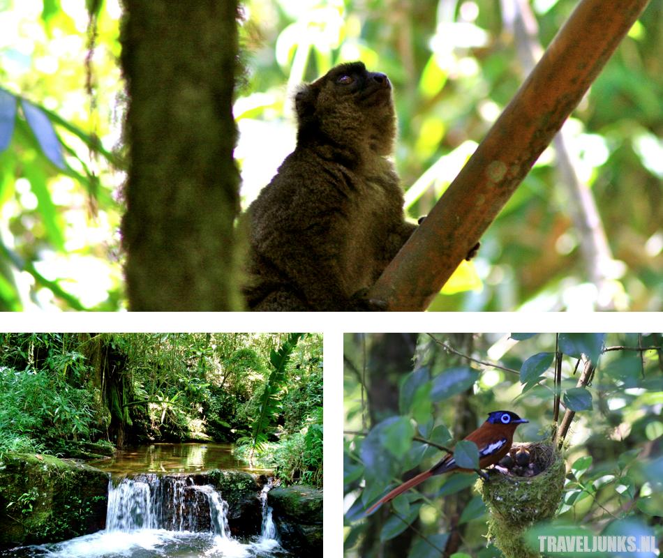 Madagaskar Ranomafana