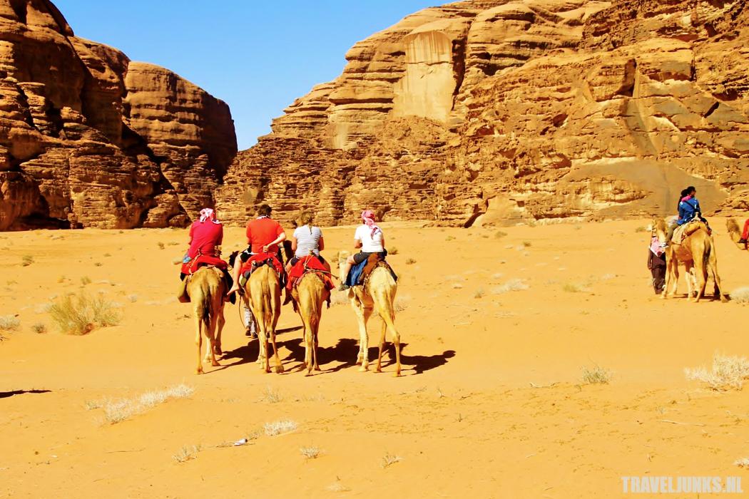 Jordanie kamelenrit