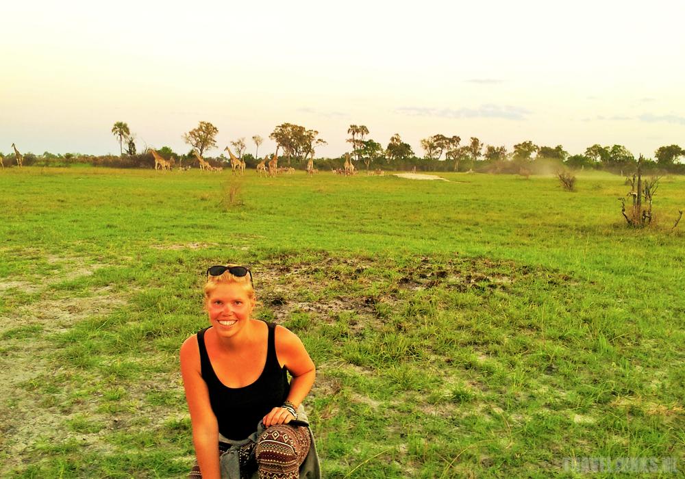 Okavango Linda giraffen