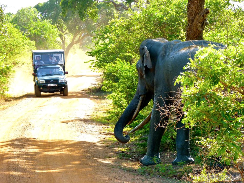 Sri Lanka Yala