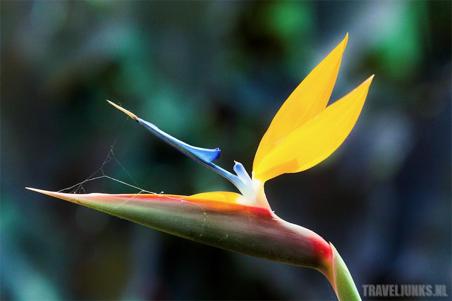 medellin bloem