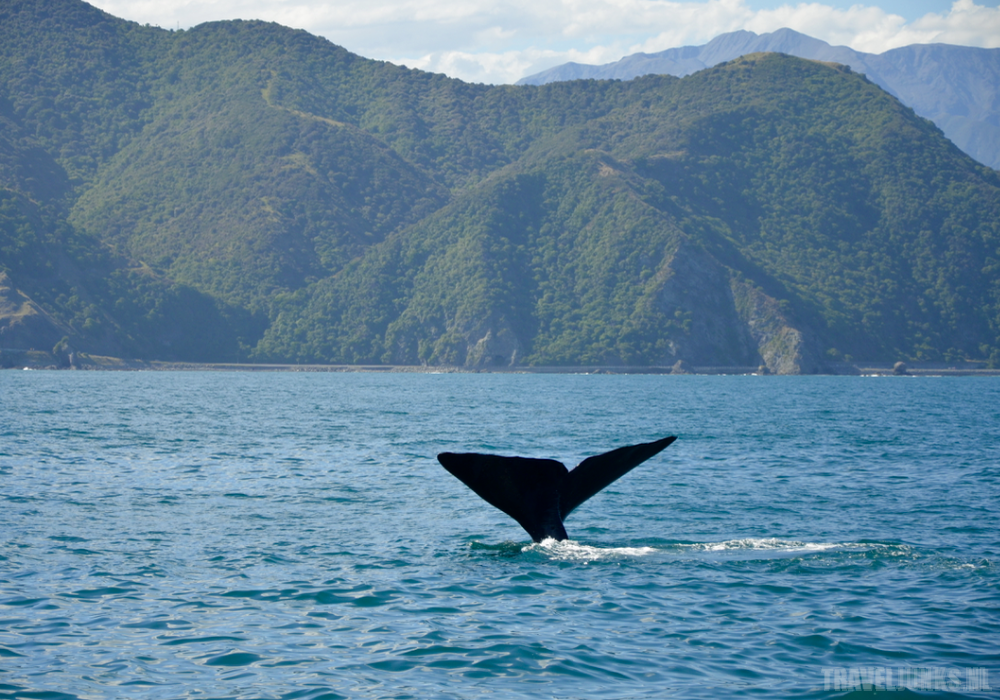 Het Zuidereiland Van Nieuw-Zeeland