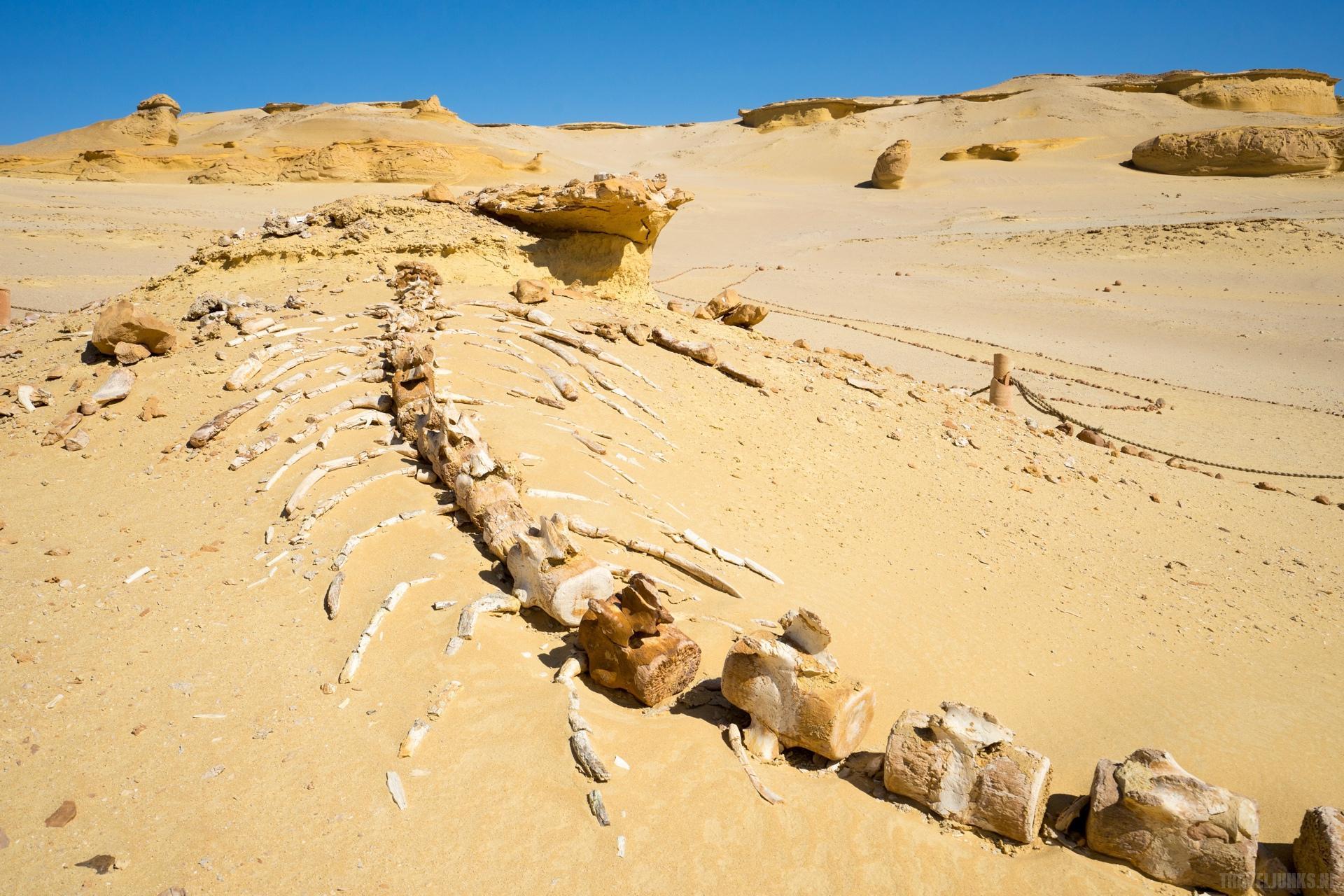 Reizen woestijn