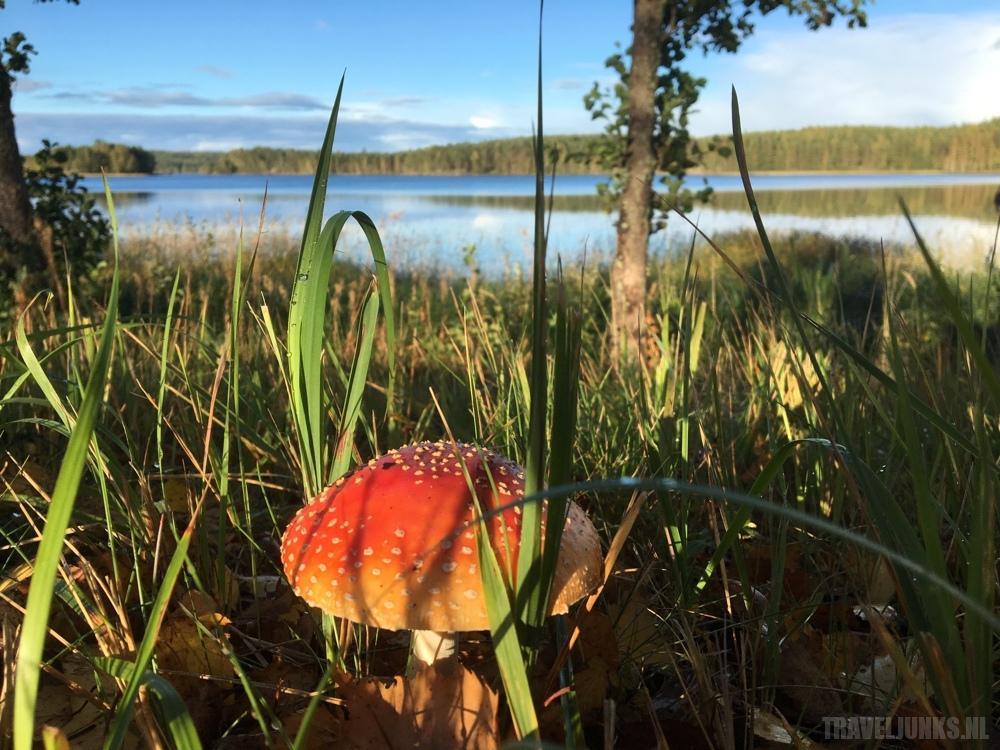 Lapland paddestoelen