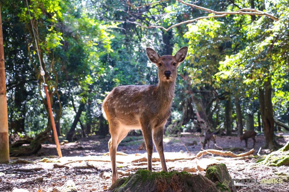 Sikahert Nara